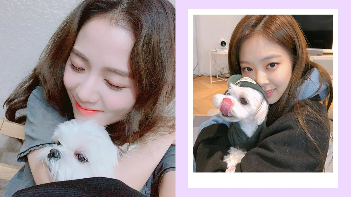 the blackpink girls are adoring dog moms just like us
