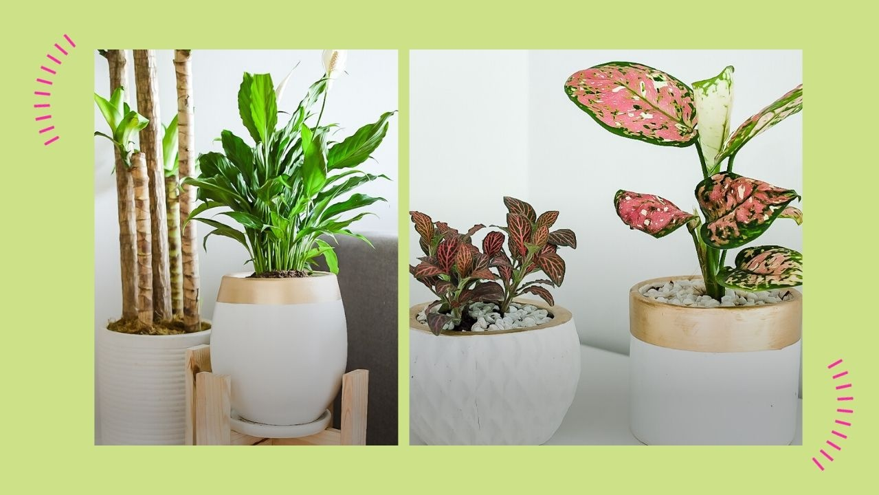 Do You Have New Plants Here S How To Take Care Of Indoor Plants