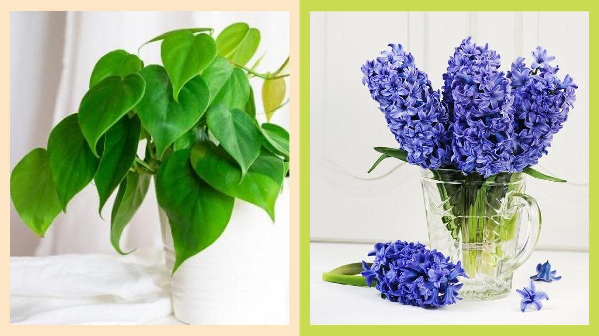 20 Indoor Plants That Don't Need Soil To Grow