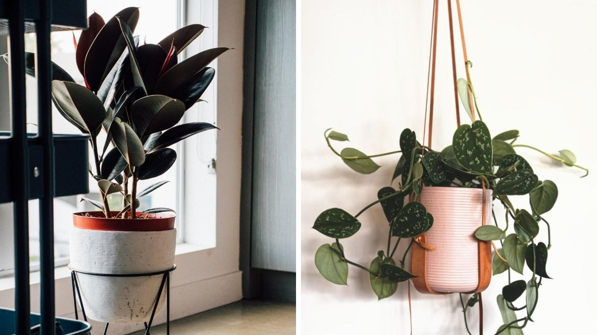 Indoor Plant Types Thinking About Buying Your A Houseplant