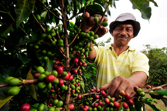 Local Coffee Farmers Get Much Needed Support From The