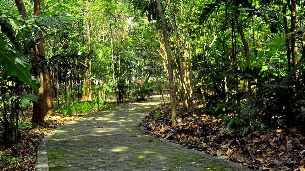 Help save arroceros forest park from destruction - Home landscape design philippines ...