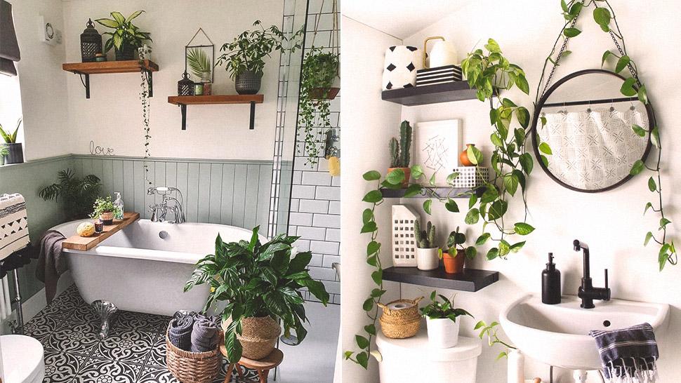 5 Ways To Arrange Plants In A Bathroom