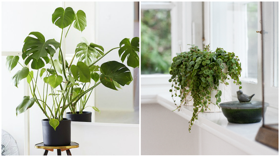 4 Plants That Don T Need Sunlight, Outdoor Plants That Don T Need Sunlight Or Water