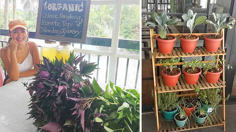 You Can Grow Your Own Vegetable And Fruit Garden At Home