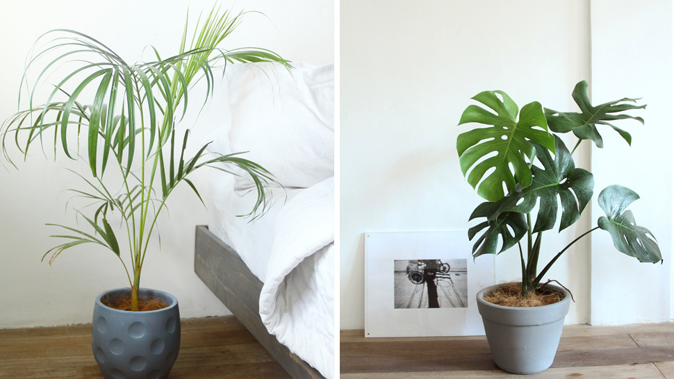 6 Plants You Can Care For If You're Setting Up An Indoor ...