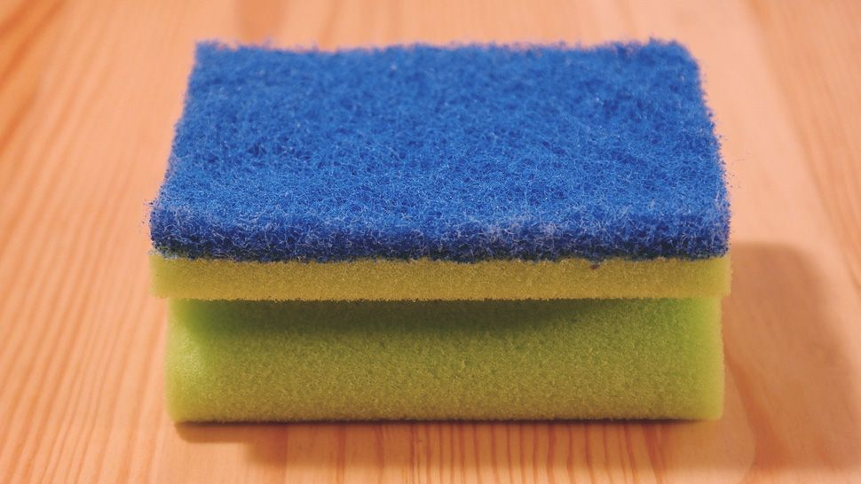 There Is Only One Way To Clean Your Kitchen Sponge,Where Is Diana Buried