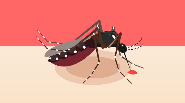 Dengue Symptoms in Children: How You Can Spot the Warnings Signs
