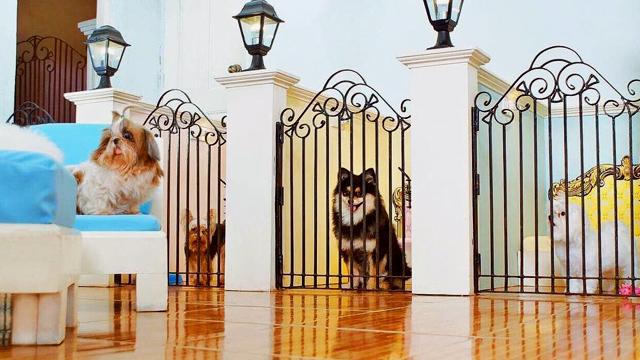 dog and cat hotels around metro manila. Black Bedroom Furniture Sets. Home Design Ideas