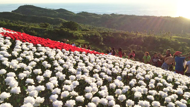 The 16,000 Blossoms Is a Must-See When in Leyte