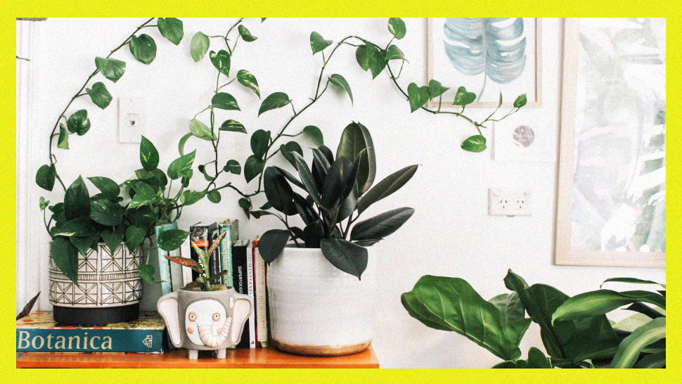 12 Online Stores That Deliver Plants For Your Indoor Garden Project