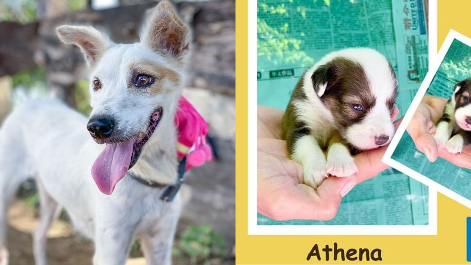 These Dogs Survived The Taal Eruption And Are Looking For A Furever Home