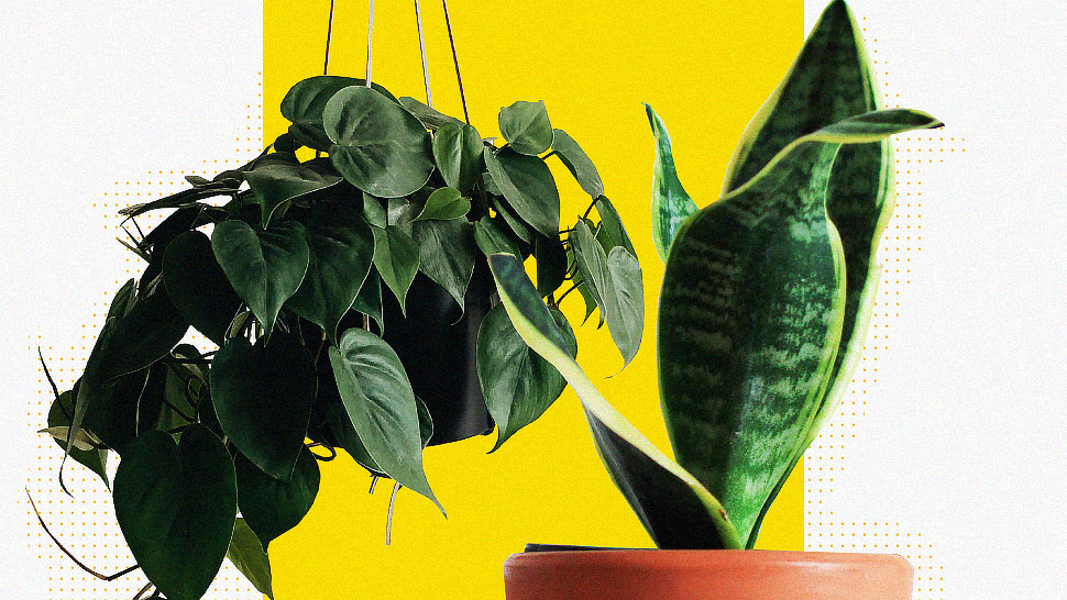 5 Best Indoor Plants for Beginners, According To Plantitos and Plantitas