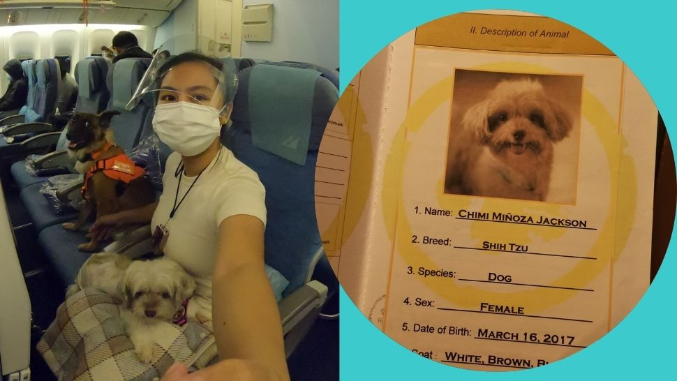 So Cute, These Two Dogs Flew from Manila to California with Their Furmom