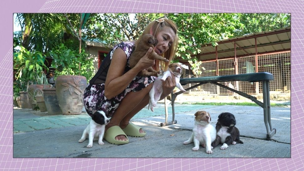 How This Woman Ended Up Adopting Over 40 Stray Dogs and 10 Cats