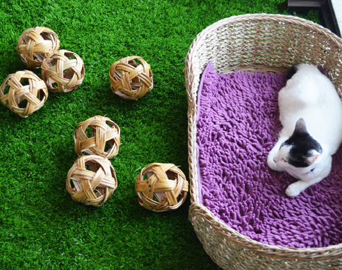6 Reasons Why You Should Visit This Cat Cafe