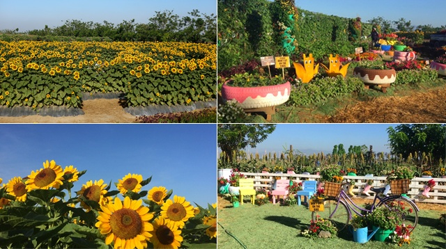 SUNFLOWER-MAIN Garden Design With Tires on art with tires, paving with tires, trees with tires, ponds with tires, retaining walls with tires, landscaping ideas with tires, planting with tires, landscape with tires,
