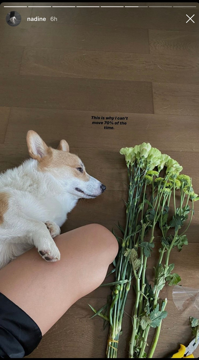 Nadine Lustre's Pretty Flowers At Home