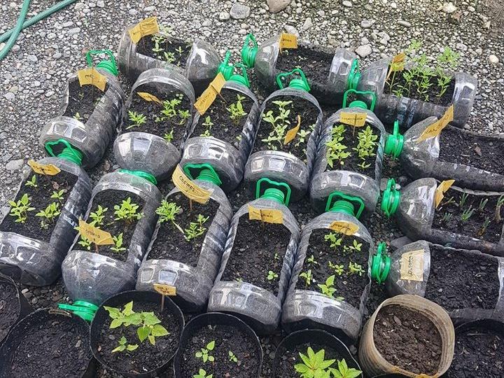 Home garden, planting seeds