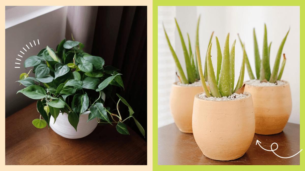 Photos of plants you can grow inside your bathroom.
