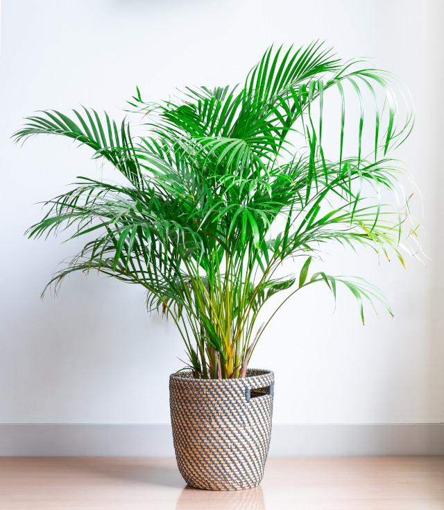 Plants To Help You Sleep Better