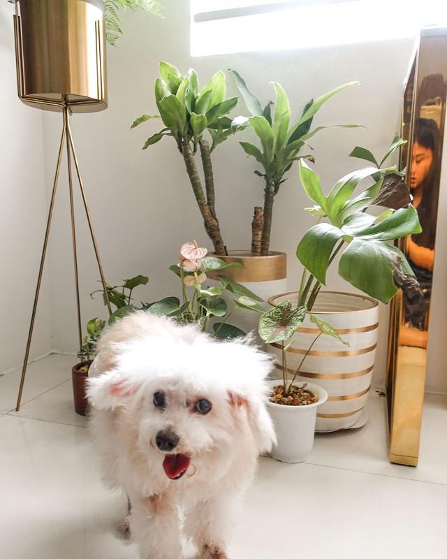 Gabbi Garcia's Pretty Flower And Plant Corners At Home