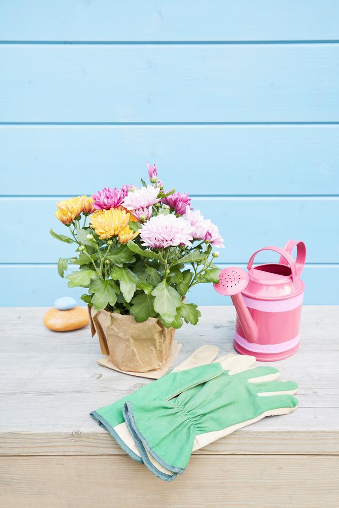 Best Flowering Plant: Chrysanthemum