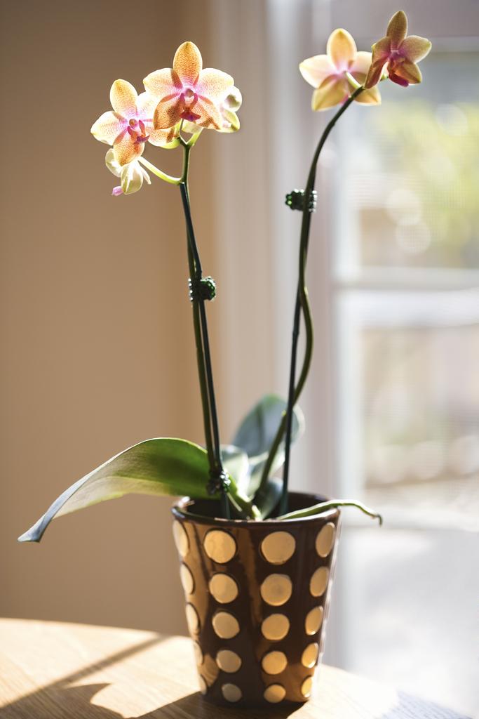 Best Flowering Plant: Orchids
