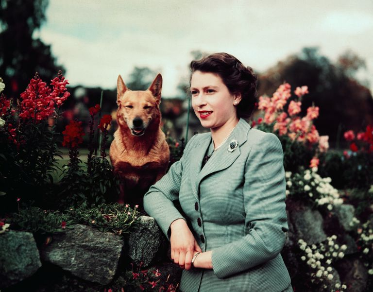 Queen Elizabeth II posing with her corgi.