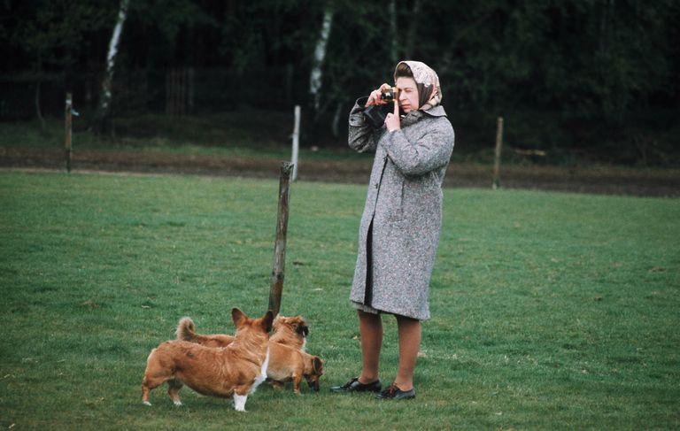 Queen Elizabeth II with her corgis.
