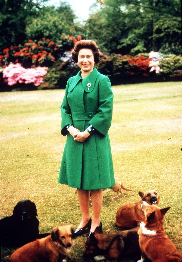 Queen Elizabeth II with corgis