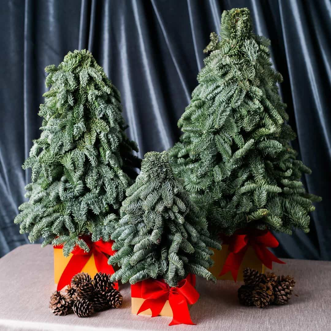 mini Christmas trees from Spruce