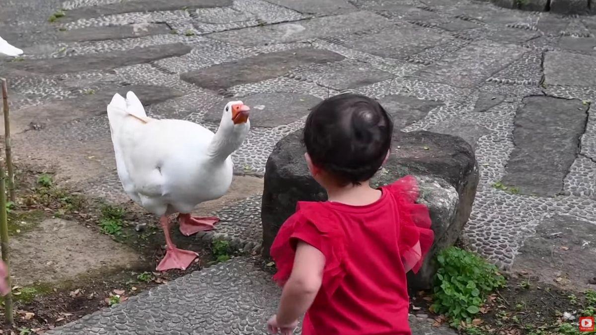 Zoe Miranda playing with the animals at The Farm at San Benito