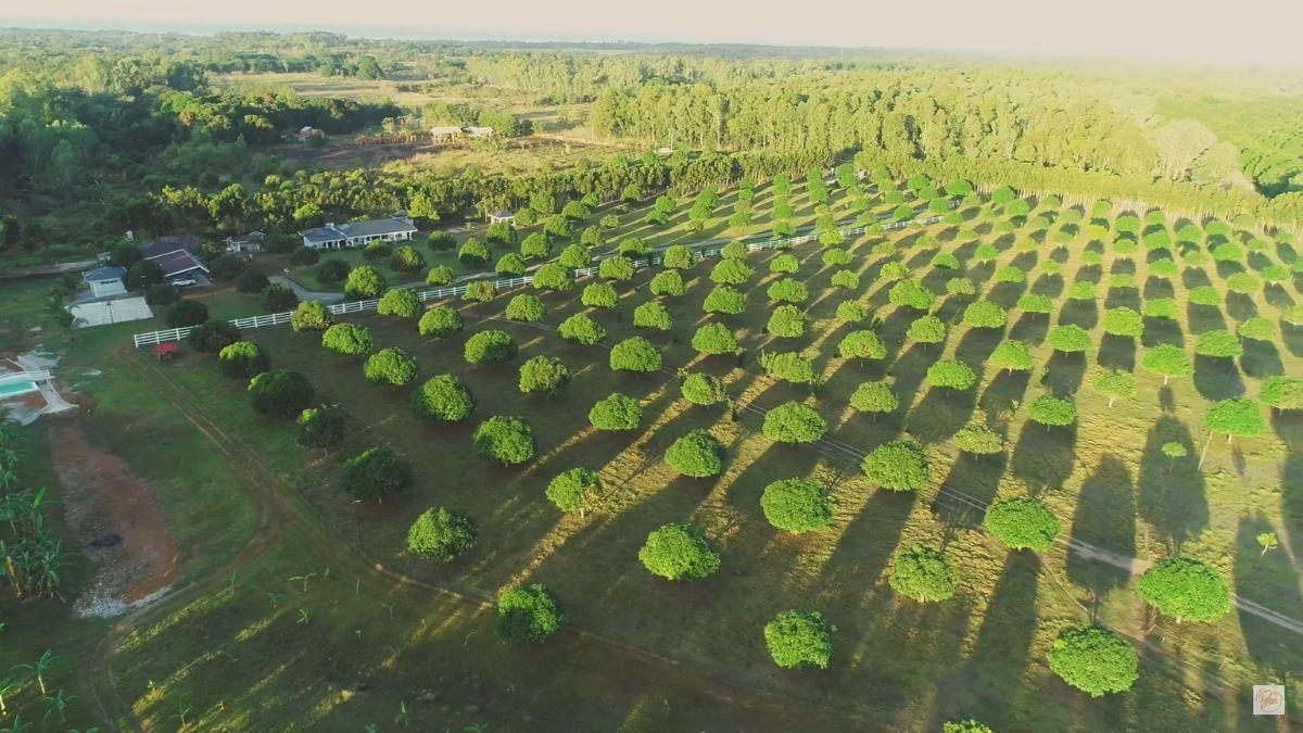 Bea Alonzo's farm in Zambales: Beati Firma