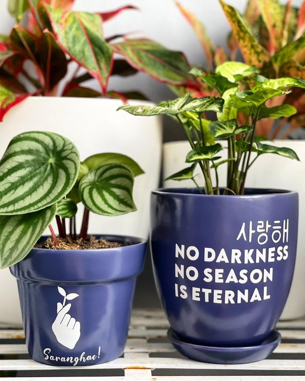 BTS-inspired pots