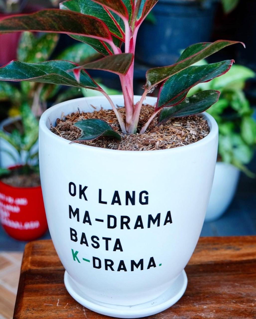 K-drama-themed pots
