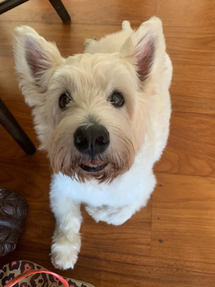 Funny and cute pet stories: Andie's dog