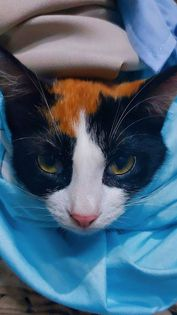 Funny and cute pet stories: Lily's cat