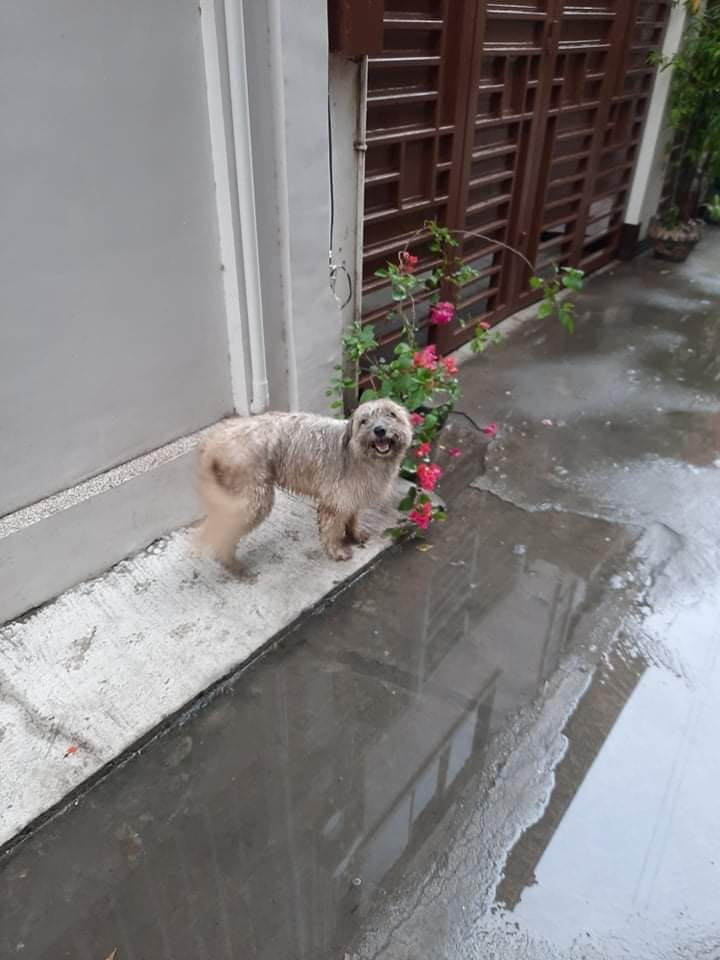 Funny and cute pet stories: Maricar's dog