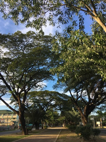I moved out of Manila and to the province (Pangasinan): a park in Lingayen
