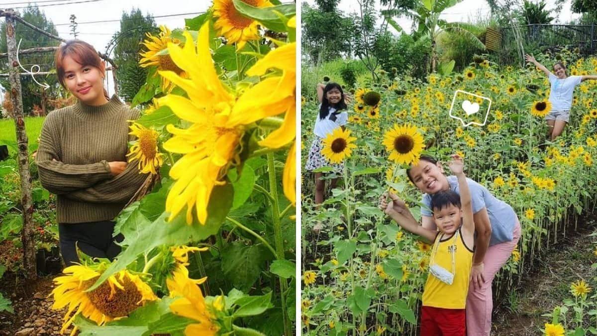 Neri Naig Miranda talks about her sunflower garden
