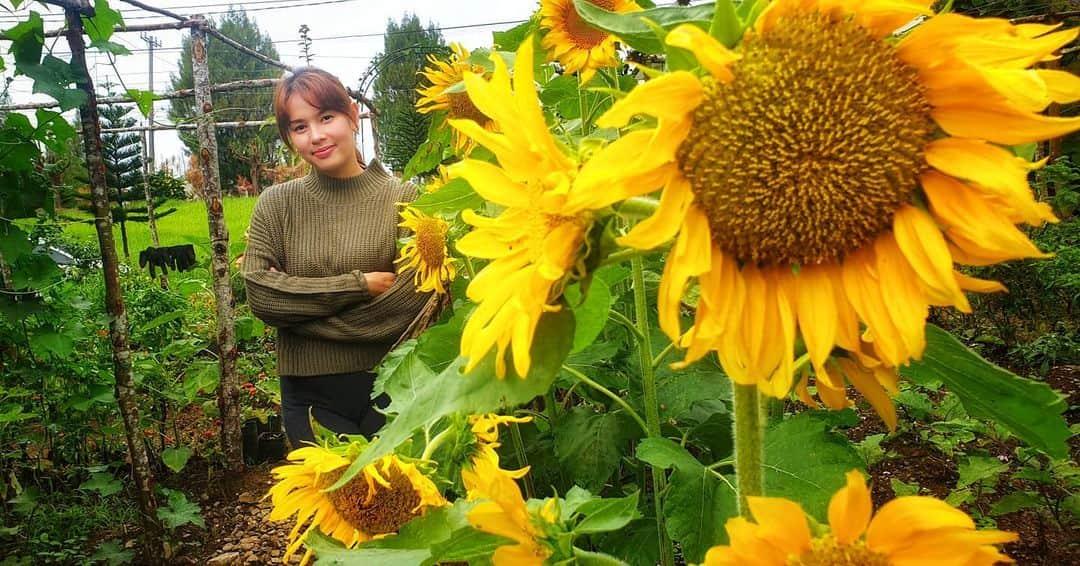 Neri Naig Miranda starts sunflower garden