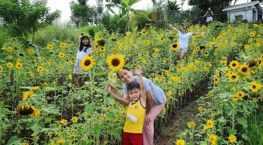 Neri Naig Miranda plants sunflower garden at cafe