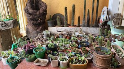 Plants owned by a pinay's dad