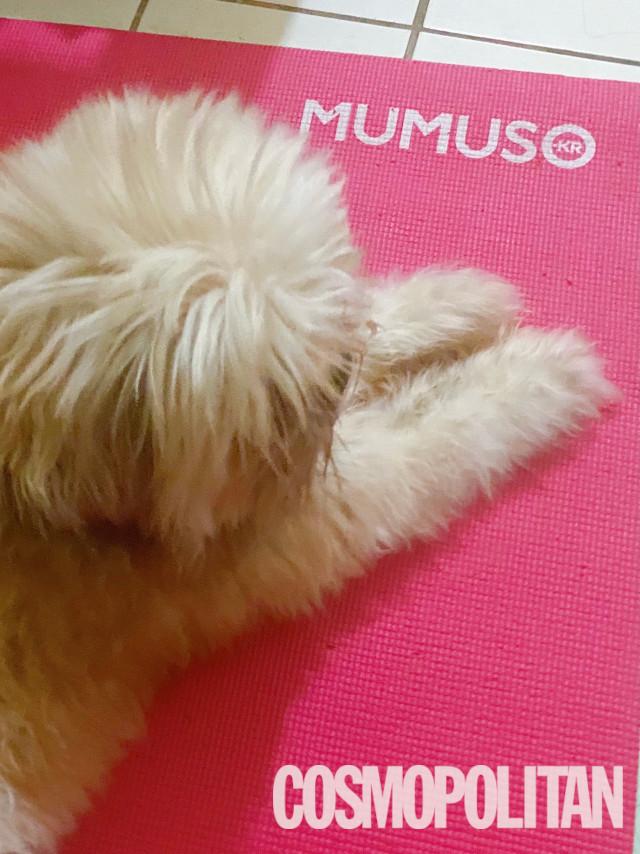 Dog resting on yoga mat