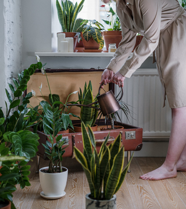 Woman watering house plants