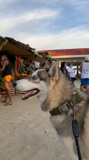 Siberian Husky Nougat in a Siargao market