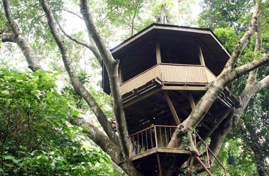 Consocep tree house
