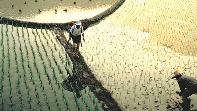Agri-based innovations: From tilapia sex change to plant hormones for big harvests
