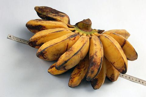 banana_FINAL.png